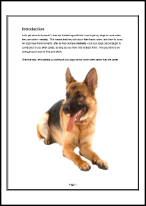 Dog Recall Special Report - Example Page 1